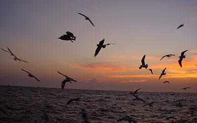 สมุทรปราการ